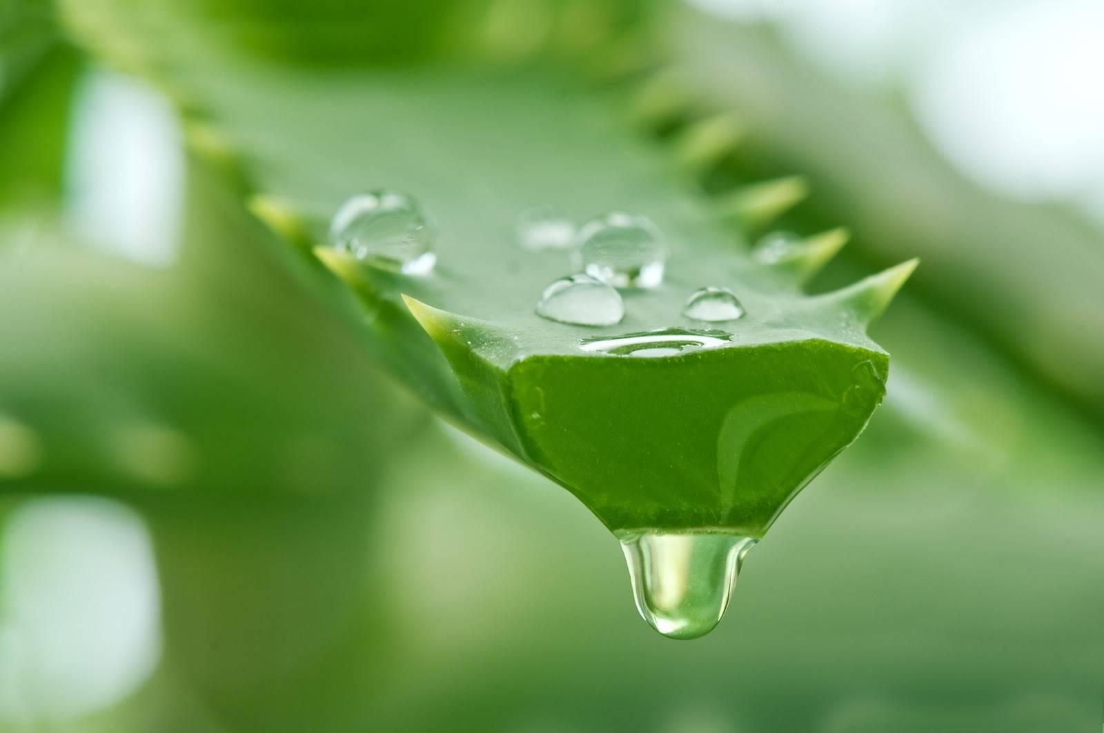 Công thức trị mụn mủ cực hiệu quả từ thiên nhiên