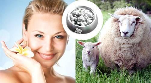 Mỗi loại kem nhau thai cừu được chiết xuất từ nhau thai của các con cừu khỏe mạnh