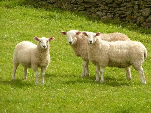 Tinh chất nhau thai cừu có những công dụng làm đẹp da đáng kinh ngạc